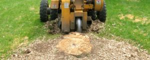 Stump Grinder at work by Carolina Tree & Landscaping Service